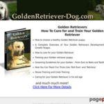 Golden Retriever Care And Training
