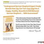 German Shepherd Handbook | German Shepherd Training Tips